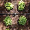 kit-universel-irrigation-hozelock-easy-drip-arrosage-jardin-7023-3